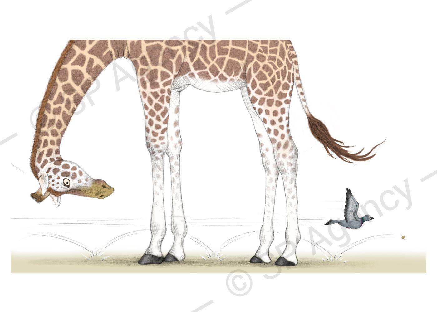 Percy---Giraffe