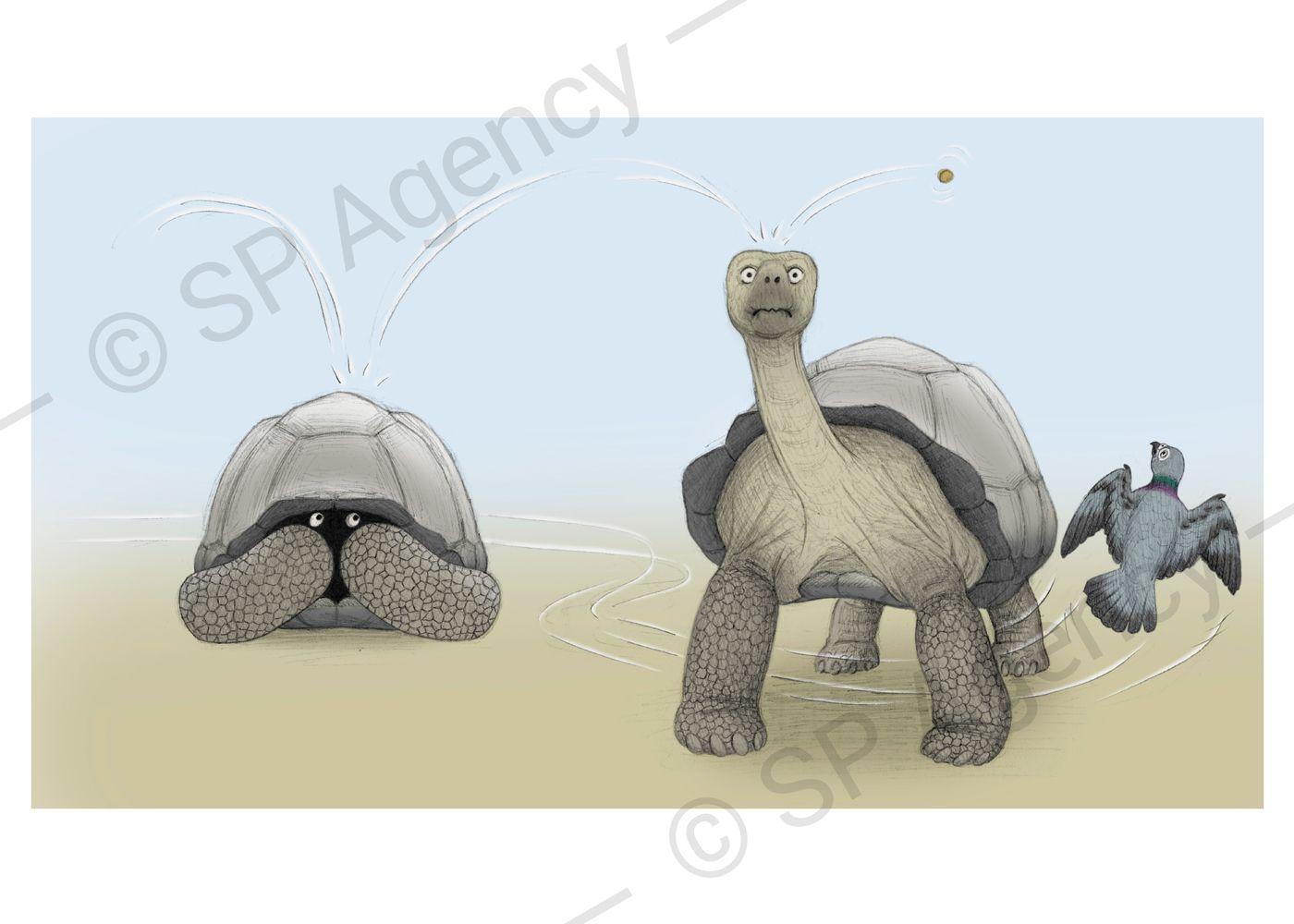 Percy---Tortoise